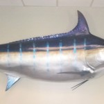 A personal touch - Blue Marlin caught by Brad Harris of Dallas Jet International